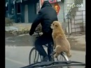 A funny doggie is on a bike