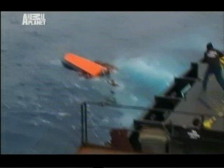 Animal Planet - Китовые Войны