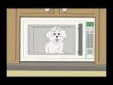 Что будет, если покормить собаку шоколадом, надеть на нее фольгу и посадить в микроволновку?