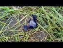 как мы поймали летучию мышь: