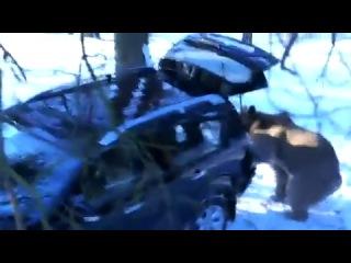 Нападение медведя на людей в зимнюю рыбалку!!! ПИ*ДЕЦ ПРИКОЛ!!!)