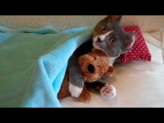 кот и мишка)