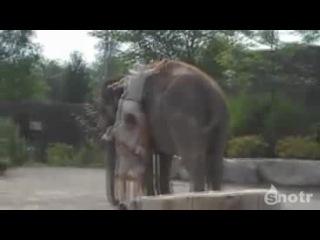 Как быстро залезть на слона :D ахахха