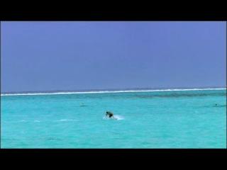Жемчужина Тихого океана, остров Бора Бора!!