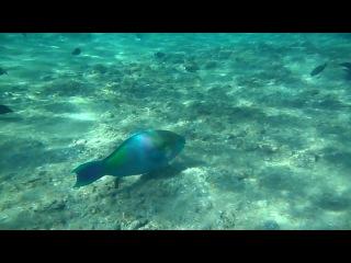 Израиль, Эйлат (Кораловый риф и его обитатели)