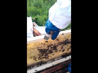 Я - пчеловод и ниипёт! ч.3