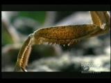 Mantis vs. Mouse