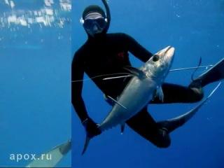 Подводная охота на Тунца и Группера