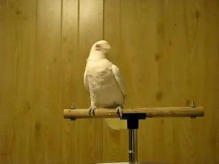 танцующий попугай dubstep