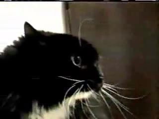 Чекнутый кот
