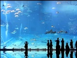 Kuroshio Sea (Okinawa) feat Карибасы