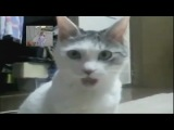 Go ! Bwaaah! Ft.The OMG Cat