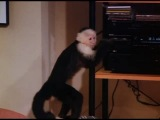 Friends. 1 season. Monkey dance