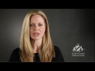 Кристин Бауэр призывает спасти сибирского тигра Тони