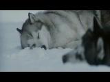 """Nightwish """"While your lips are still red""""-клип к фильму Белый плен"""