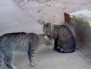 Говорящий кот (или кошка))