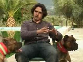 Аланская порода собак..