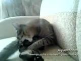 кот хуячит с ног поочереди себя в еблет