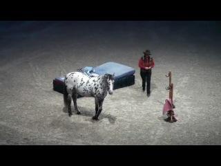 Das Lustige Pferd ( лошадям не показывать )