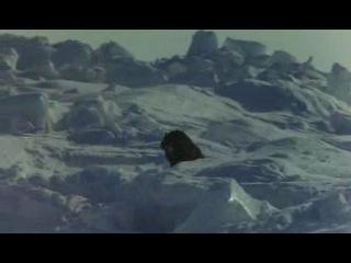 Антарктика / Antarctica / South Pole Story / Nankyoku Monogatari (1983)
