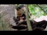 ANIMAL CRACKERS [Shamrock Edit] (HQ)