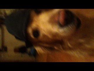 Собаки в шляпах снятые широкоугольным обьективом