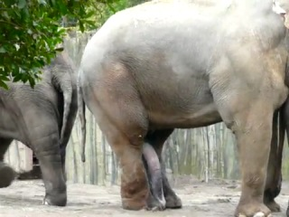 Хуй у слона фото 35-842