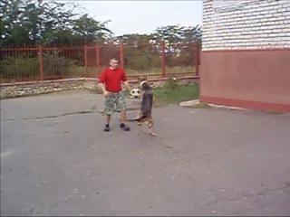 Собака играет в футбол | Dog plays footbal