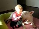 Бультерьер очень злая собака.