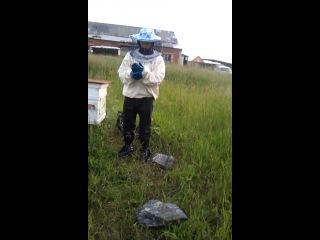 Я - пчеловод и ниипёт! ч.1