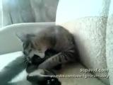 Сумасшедший кот!!!!!!!!СМОТРЕТЬ ВСЕМ!!!РЖАЧ,ДО БОЛИ ЖИВОТА))))))))))))))))))))))
