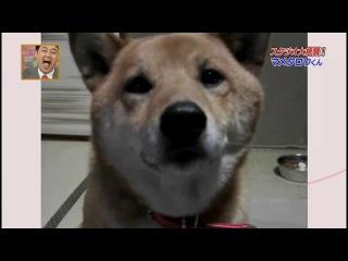 Собака, которая смешно гавкает