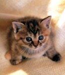 Женька Котёнок