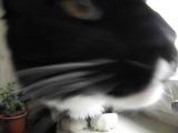 Немного кота (морда лица only)