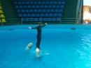 Небуг. Сентябрь 2011. Дельфинарий. Очень красивый танец дрессировщика и дельфинов. Вот оно - доверие людей и этих красивых морск