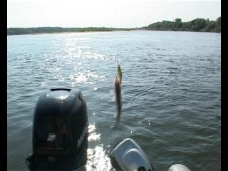 Кузнецов рыбалка разгуляй