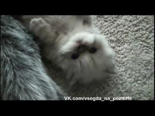 Самый милиый и пушистый котенок' onkeypress='onCtrlEnter(event, cur.saveVideo)