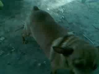 Гуня трахает игрушку-собаку