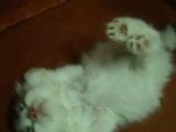 Кот, котик, мило, котенок, спит, смешно, малыш, сон, прикол :)
