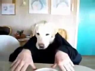 Собака ест руками xDxDxDxD