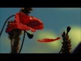 Цыганская сказка 'Аленький цветочек'