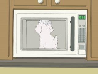 Cavalcade of Cartoon Comedy - что будет если покормить собаку шоколадом надеть на неё фольгу и посадить в микроволновку