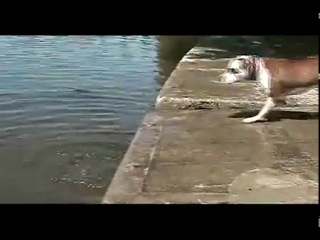 Stupied dog
