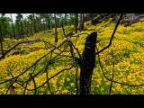 Норвежский фотохудожник Терье Соргьерд. (Смотреть только в 720 HD)