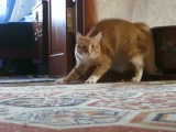 кот,человек невидимка,шок,уход,ржака,стеб,прикол,няша,ржач,до слез :)