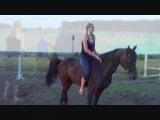 Испанская лошадь))