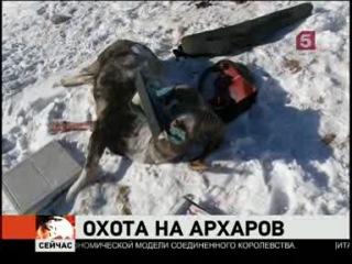 Верховный суд Алтая отменил оправдательный приговор по громкому делу о браконьерской охоте на архаров