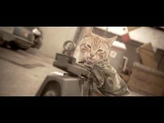 Котэ-пулемётчик