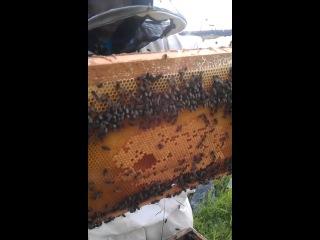 Я - пчеловод и ниипёт! ч.2