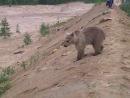 Мишка на прогулке в бригаде ЗАО СНПХ.